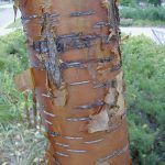 image of tree bark
