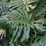 image of plant