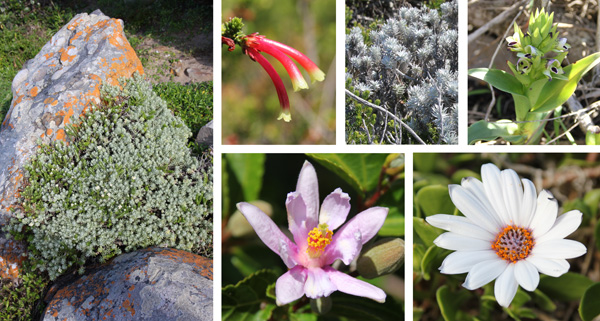 A variety of plants we couldn't immediately identify.