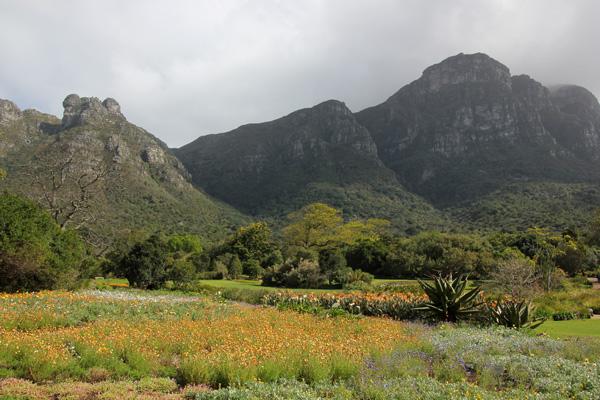 A Visit To Kirstenbosch Botanical Garden But Not Table