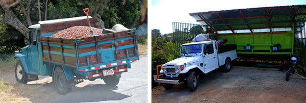 Truck carrying coffee berries (L) to local receiving station (R).