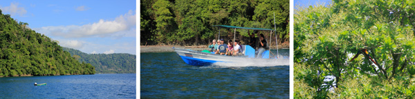 Golfo Dulce (L), part of the group on the boat to the lodge (C), and macaws in the wild cashew tree on the beach – they blend in surprisingly well despite their bright colors (R).
