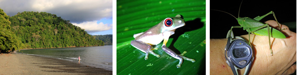 Storm clouds over beach (L), gray tree frog (C), a large katydid evicted from John and Lila's room (R).