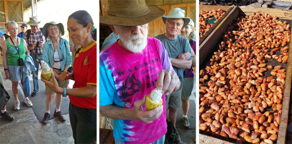 The group watches as the cacao pod is opened (L); John samples one of the cacao seeds covered with white (C); roasted cacao seeds (R).