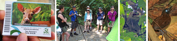 Tickets to Manuel Antonio National Park (L); the group learns about a couple of palm trees (LC); a two-toed sloth high in a tree (RC); and a chestnut-backed antbird (R).