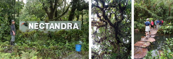 Entrance to Nectandra Cloud Forest Garden (L); epiphytes it the trees (C); walking the stone path in the cultivated area (R).