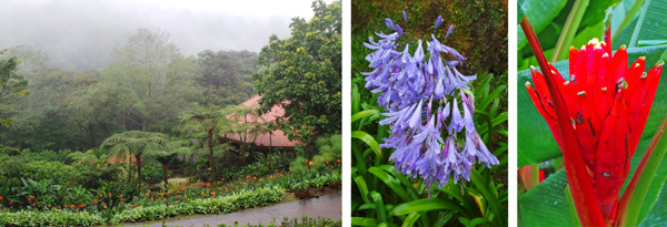 View of the Gardens from the entrance (L); scarlet banana, Musa coccinea (C); and agapanthus flowers (R).