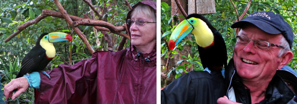A keel-billed toucan sits on Cindy's arm (L) and Dave is thrilled to have the bird sit on his shoulder (R).