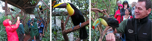 Judy photographs one of many toucans in the enclosure (L); black-mandibled toucan (C); and driver Ricardo gets to have a toucan sit on his arm (R).
