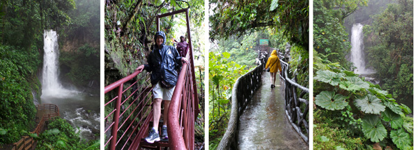 Magia blanca waterfall (L); Lila and Cindy climb down the steep steps along the trail (LC); Kari walks along the raised trail (RC); Gunnera insignis in front of one of the lower waterfalls (R).