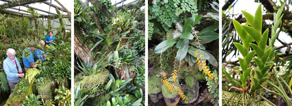 Inside the miniature orchid house.