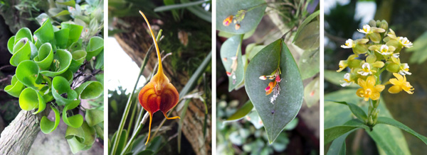 Some of the tiny treasures in the miniature orchid house.