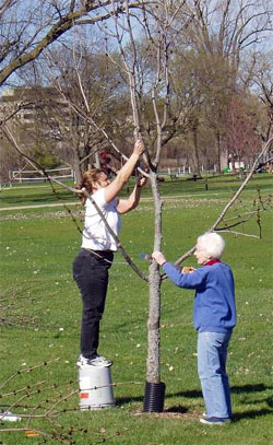 Arbor Day is for tree maintenance as well as planting.