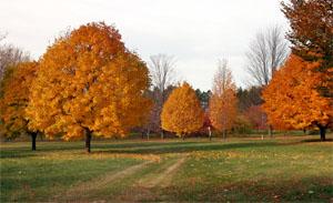 Trees provide many aesthetic and environmental benefits.