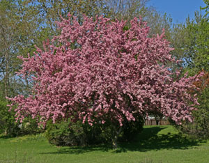 National Arbor Day is celebrated each year on the last Friday in April.