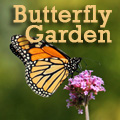 Create a Butterfly Garden Title Image