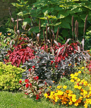 Plants with dark foliage offer contrast in the garden.