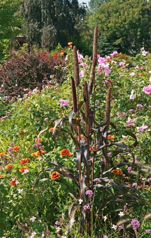 The Dark Side: Plants with Black or Purple Foliage – Master Gardener Program