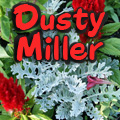 Dusty Miller Title Image