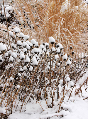 Gardening may be a distant memory in late fall and winter.