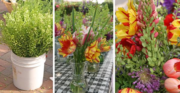 Field Pennycress, Thlapsi arvense – Master Gardener Program
