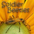 Summer season bugs – Grasp Gardener Program