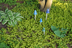 Golden creeping jenny as a groundcover in a shady area.