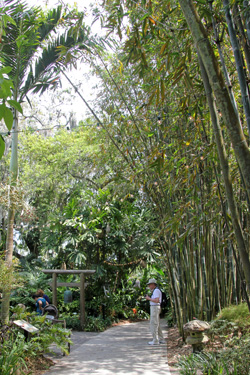 Tall bamboo plants (on right) tower over the path.