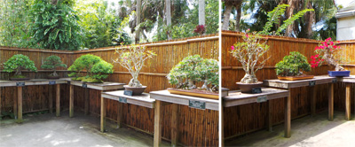 The bonsai collection on display.
