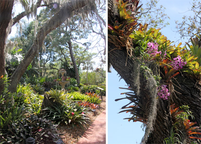 The bromeliad garden has both epiphytic and terrestrial plants.