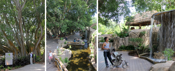 Huge banyon trees (L) shade the Childrens Rainforest Garden with decks (C) and a waterfall (R).