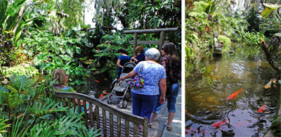 Visitors enjoy the tranquil Koi pond with its colorful fish.