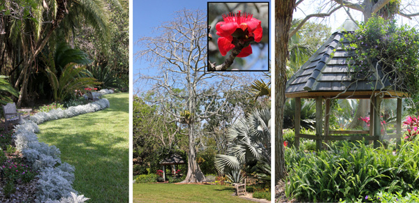 Flowers edge the central lawn (L). A red silk cotton tree (Bombax ceiba, with inset flower) towers (C) over the gazebo (R).