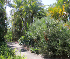The entrance to the Palm Grove.