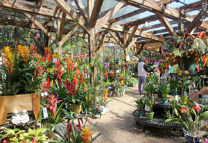 Blooming bromeliads, orchids and other plants are for sale in The Garden Shop.