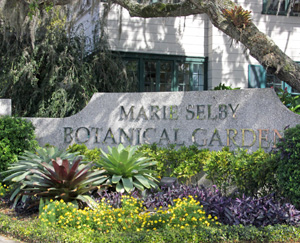 Marie Selby Botanical Gardens Is Located In Bustling Sarasota, Florida.