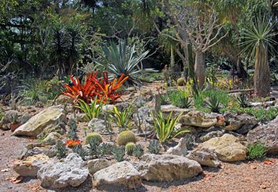 The succulent garden fills a sunny spot.