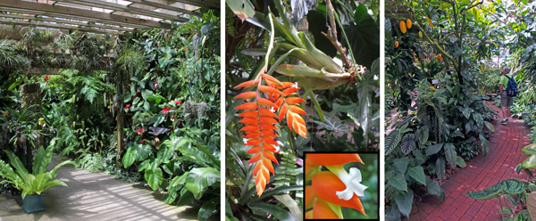 The Tropical Display House includes many types of plants (L) including many types of epiphytes such as this blooming bromeliad (C) and in-ground plantings (R).