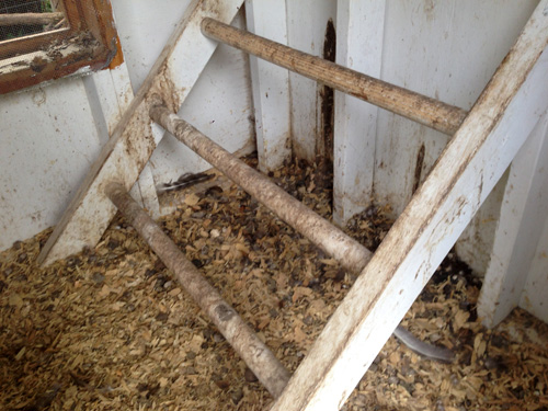 Many animal manures are mixed with bedding such as wood shavings in this chicken coop.
