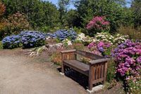 A bench is set among blooming hydrangeas.