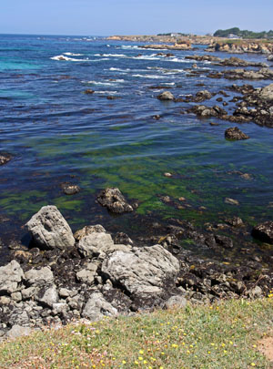 The Mendocino Botanic Garden is set on bluffs overlooking the Pacific Ocean.