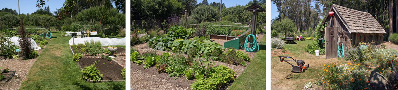 The vegetable garden and nearby areas