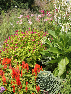 Four oclocks are a good addtion to an annual garden.