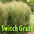 Nice Grasses