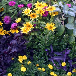 'Prairie Sun' mixes well with annuals