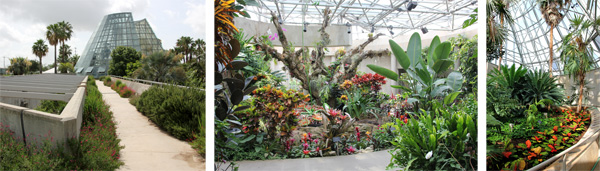 The iconic Palm and Cycad Pavilion (L); orchids and others in the Exhibition Room (C) and in the palm house (R).