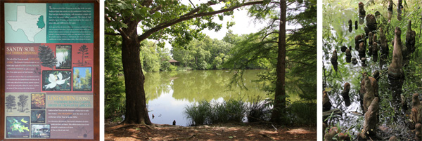 The East Texas Trail (L) loops around the lake (C) surrounded by trees including bald cypress with their distinctive knees sticking out of the water (R).