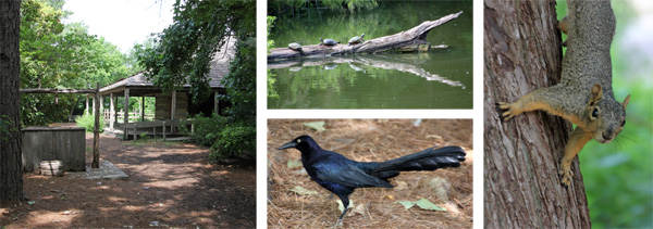 The log cabin on the East Texas Trail is set among pine trees (L). Look for wildlife around the water, including turtles sunning on a log (top C), great-tailed grackles (bottom C), and squirrels in the trees (R).