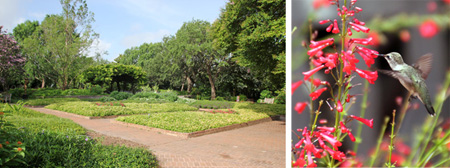 Plantings in the Formal Beds (L) change seasonally and flowers there attract pollinators such as hummingbirds (R).