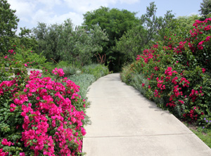 A flower-lined path in the Garden.